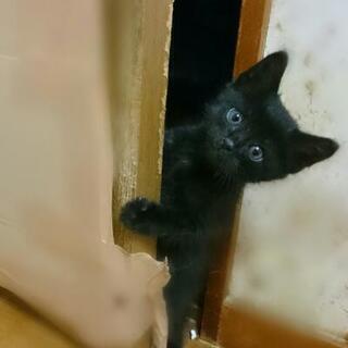 縞黒猫の女の子