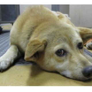 岡山保健所から保護犬のナノンちゃんの里親募集