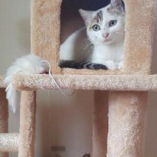 生後9ヶ月くらいの小柄なメス猫さん