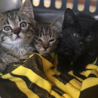 決まりました。生後40日子猫3匹