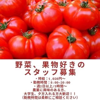 青果店の販売スタッフ<野菜・果物好き大歓迎!>
