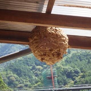 ⭐ハチの(巣)駆除  ハチでお困りの方お助けします!