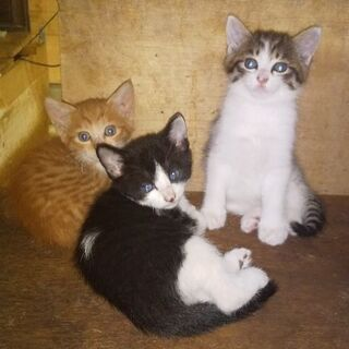 容姿も性格も、異なる3兄妹。