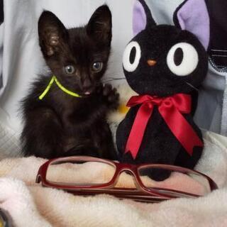 トライアル中☆子猫の里親探しています☆