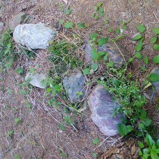 庭石・植木差し上げます