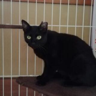 黒猫さんの女の子👧一才、懐いて撫で撫で出来ます🎵