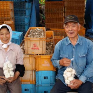 ニンニク収穫作業 - アルバイト