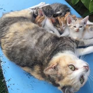 4月25日生まれの猫ちゃんメス2匹里親募集! − 千葉県