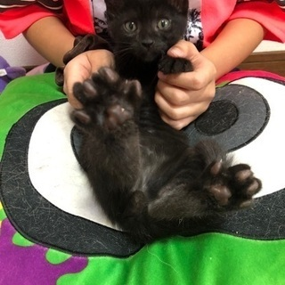 生後2ヶ月の子猫達の里親さんを募集してます。