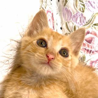 【里親様決定】☆子猫茶トラ♂☆しあわせにしてください。