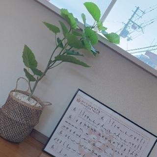 八尾市志紀駅から30秒 ヨガ・ピラティス教室 小さなヨガスタジオ  − 大阪府