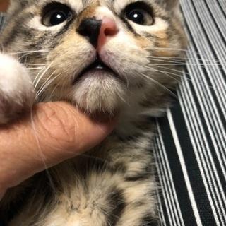 4月6日産まれの子猫ちゃんです。