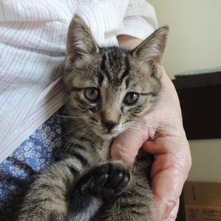 黒2、キジ2、キジ白1匹、側溝から救出!母猫もトコトコ!