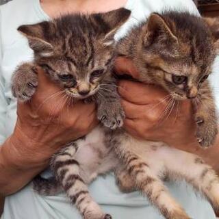 子猫さん、保護しております☘️ 2ヶ月位です。