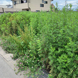雑草の草刈り致します 坪100円より