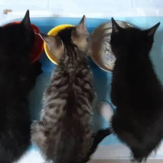 【募集休止】子猫の里親を募集します