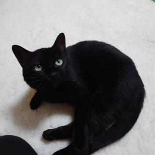 黒猫推定2歳 里親様決まりました
