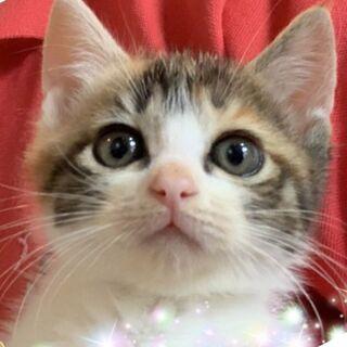 正式譲渡♥️地域猫レスキュー♥あかり