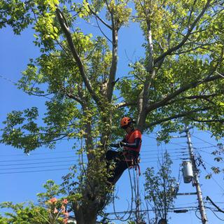 【特殊伐採】立木の伐採 見積・相談無料です