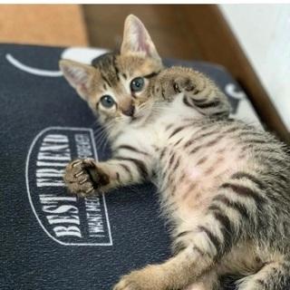 可愛いキジ猫ちゃん(しーちゃん)