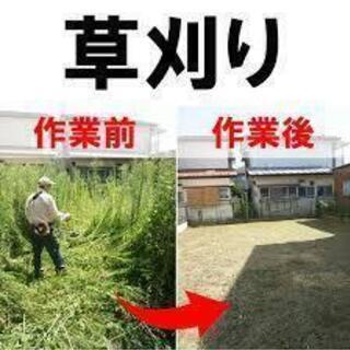 剪定・草刈り・木伐採 承ります!!