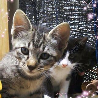 地域猫レスキュー♥コトラ