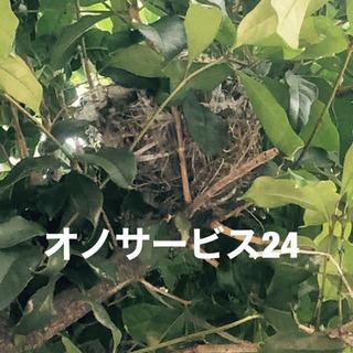 愛知県全域対応、蜂駆除、ヘビ駆除、コウモリ駆除など何でも‼️