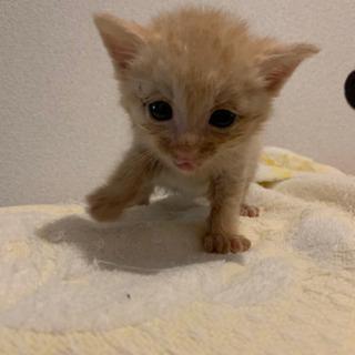 野良さんの多い地域にひとりぼっちでいた子猫さん