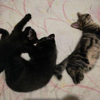 4月5日(恐らく)産まれ子猫(あと黒猫2匹となりました)