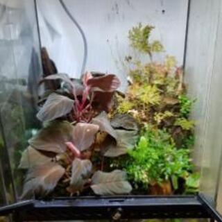 テラリウム 水槽+水草セット