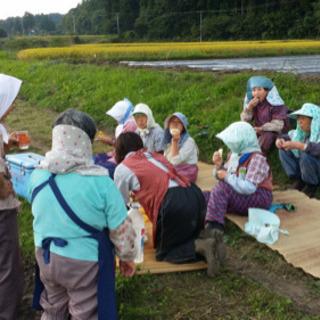 農業の軽作業 − 青森県