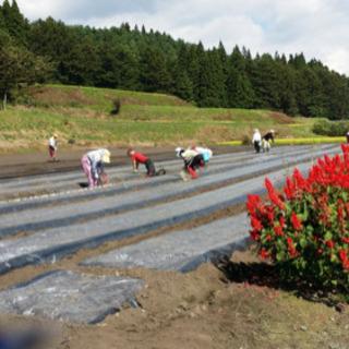 農業の軽作業 - 十和田市