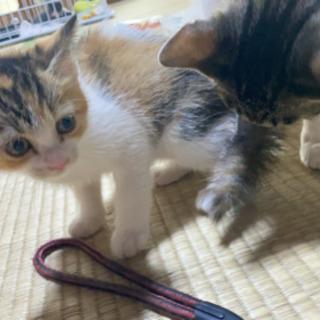 三毛猫ちゃん♡