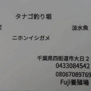 釣り堀タナゴ淡水魚 四街道オープン‼️