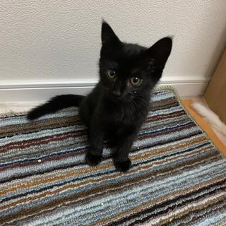 黒猫ちゃん 3ヶ月ぐらいです