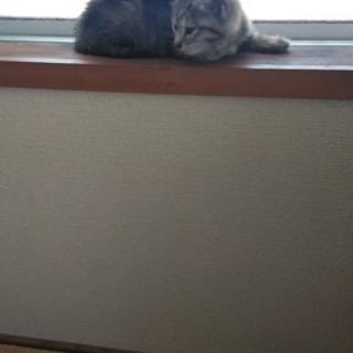 保護猫ちゃん6月1日保護