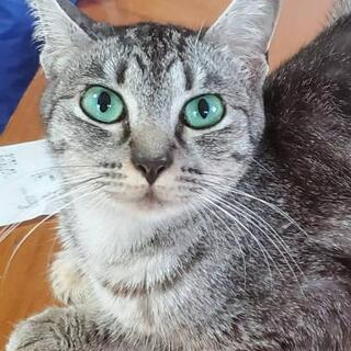 甘えん坊の黒猫ちゃん里親募集(代理) − 福岡県