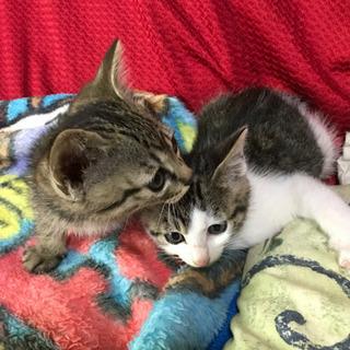 子猫2匹 - 七尾市