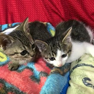 子猫2匹の画像