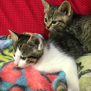 子猫2匹 - 猫