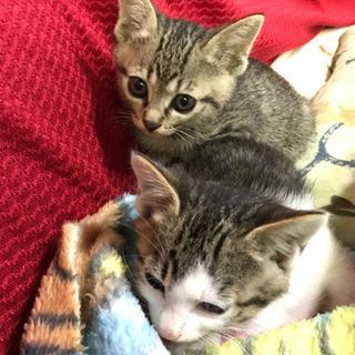 子猫2匹 − 石川県