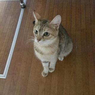 急募です。難易度高い美人さんネコ。【お話し中】