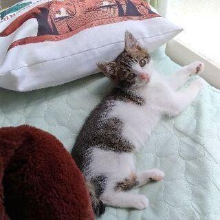 子猫を拾いました(生後1ヶ月)