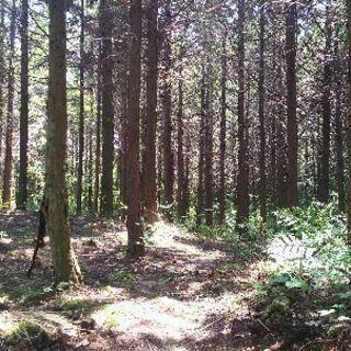 森林浴出来る場所を提供します。