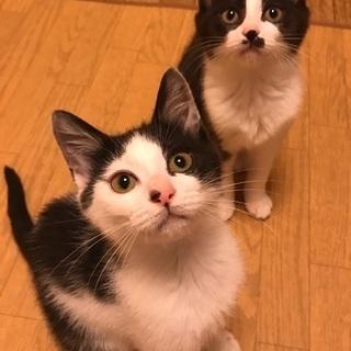 白黒模様の可愛い姉妹