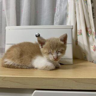 助けてください - 猫