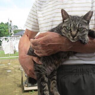 城址公園に置き去りにされた 親子猫