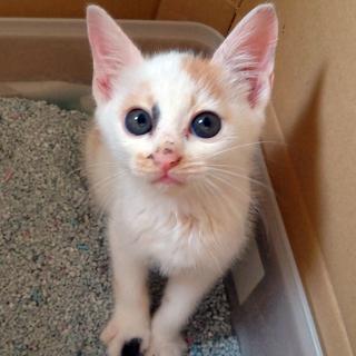 5月中旬生まれ、元気な子猫5匹きょうだい!