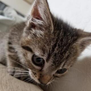 生後2ヶ月  兄妹子猫   素敵なお譲り先が見つかりました*°