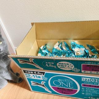 猫の餌 ピュリナ ワン 未開封8袋